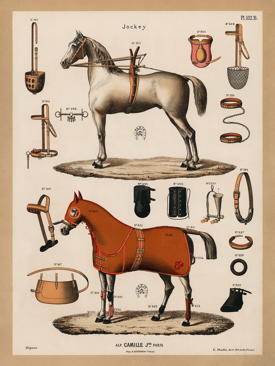 A chromolithograph of horses with antique horseback riding equipments (1890), from an antique horseback riding catalog.…