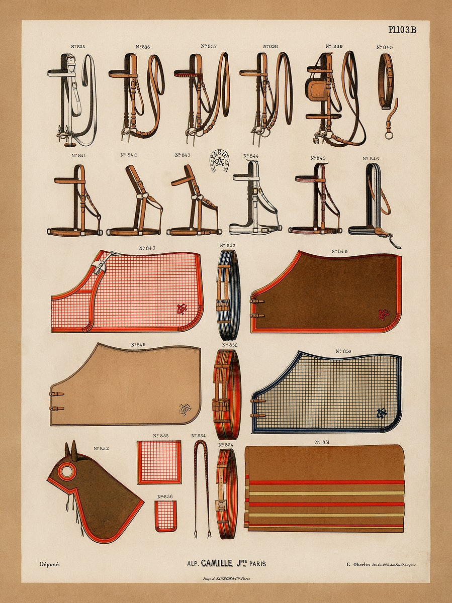 A chromolithograph of horseback riding equipments design showcase from an antique horseback riding catalog (1890). Digitally…