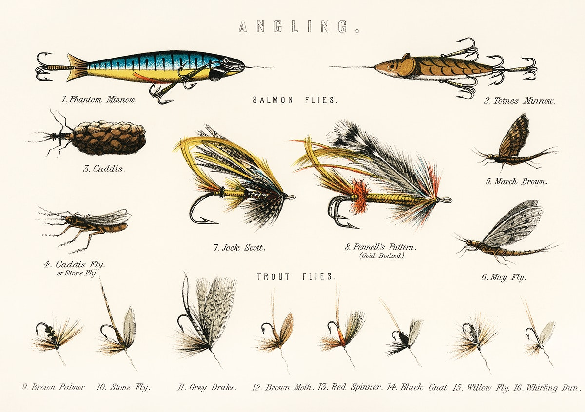 Angling baits from British Fresh Water Fishes (1879). Digitally enhanced from our own original plate.