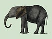 """The History of the Earth and Animated Nature (1848) by <a href=""""https://www.rawpixel.com/search/Oliver%20Goldsmith?sort=curated&amp;page=1"""">Oliver Goldsmith</a> (1728-1774), a portrait of a dark grey elephant. Digitally enhanced by rawpixel."""