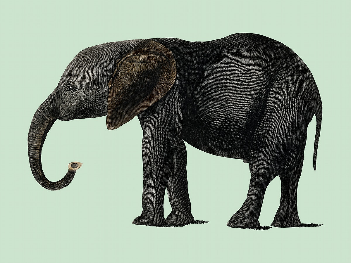 The History of the Earth and Animated Nature (1848) by Oliver Goldsmith (1728-1774), a portrait of a dark grey elephant.…