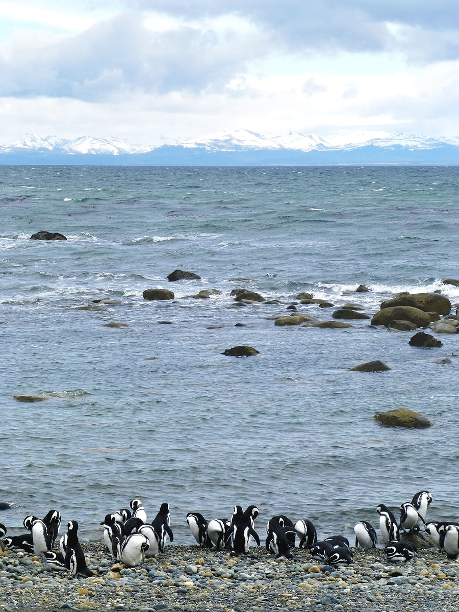 A colony of Magellanic penguins near Punta Arenas, Chile. Original from NASA. Digitally enhanced by rawpixel.