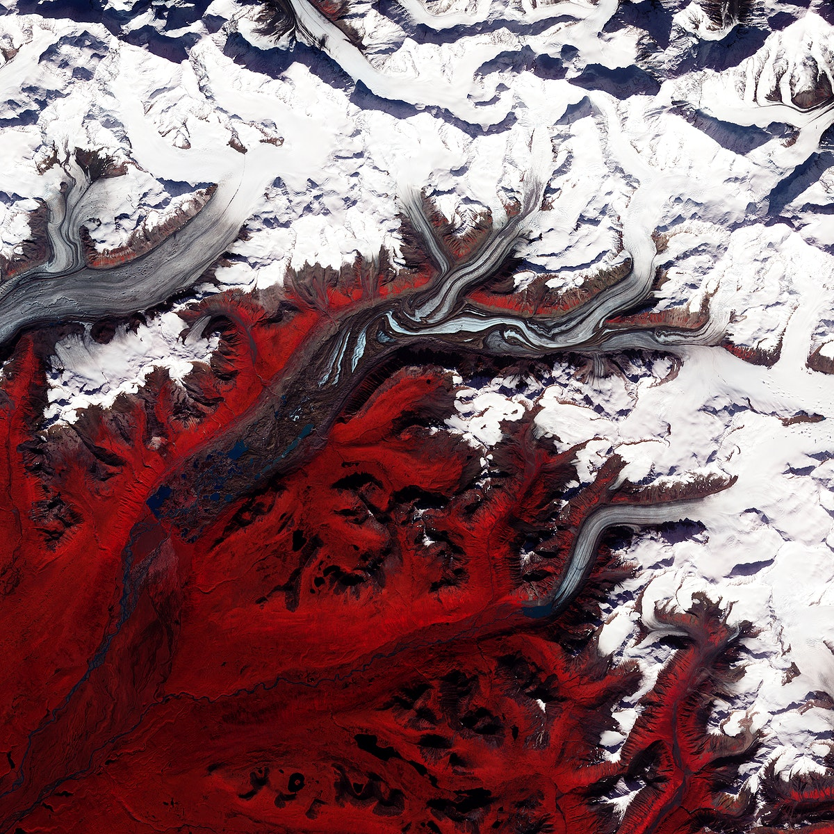 Like rivers of liquid water, glaciers flow downhill, with tributaries joining to form larger rivers. Original from NASA.…