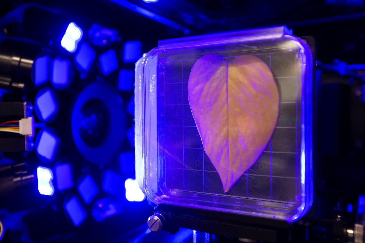 Inside the Spectrum prototype unit, organisms in a Petri plate are exposed to blue excitation lighting. Original from NASA.…