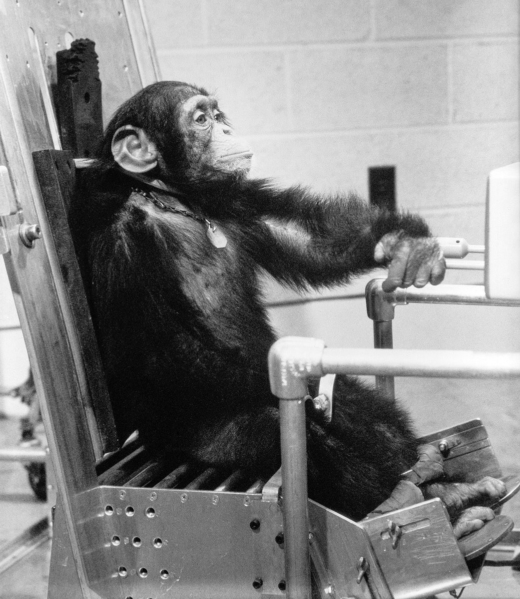 """Chimpanzee """"Ham"""" during preflight activity with one of his handlers prior to the Mercury-Redstone 2 (MR-2) test flight which…"""