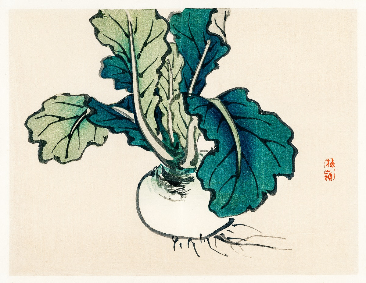 Radish by Kōno Bairei (1844-1895). Digitally enhanced from our own original 1913 edition of Barei Gakan.