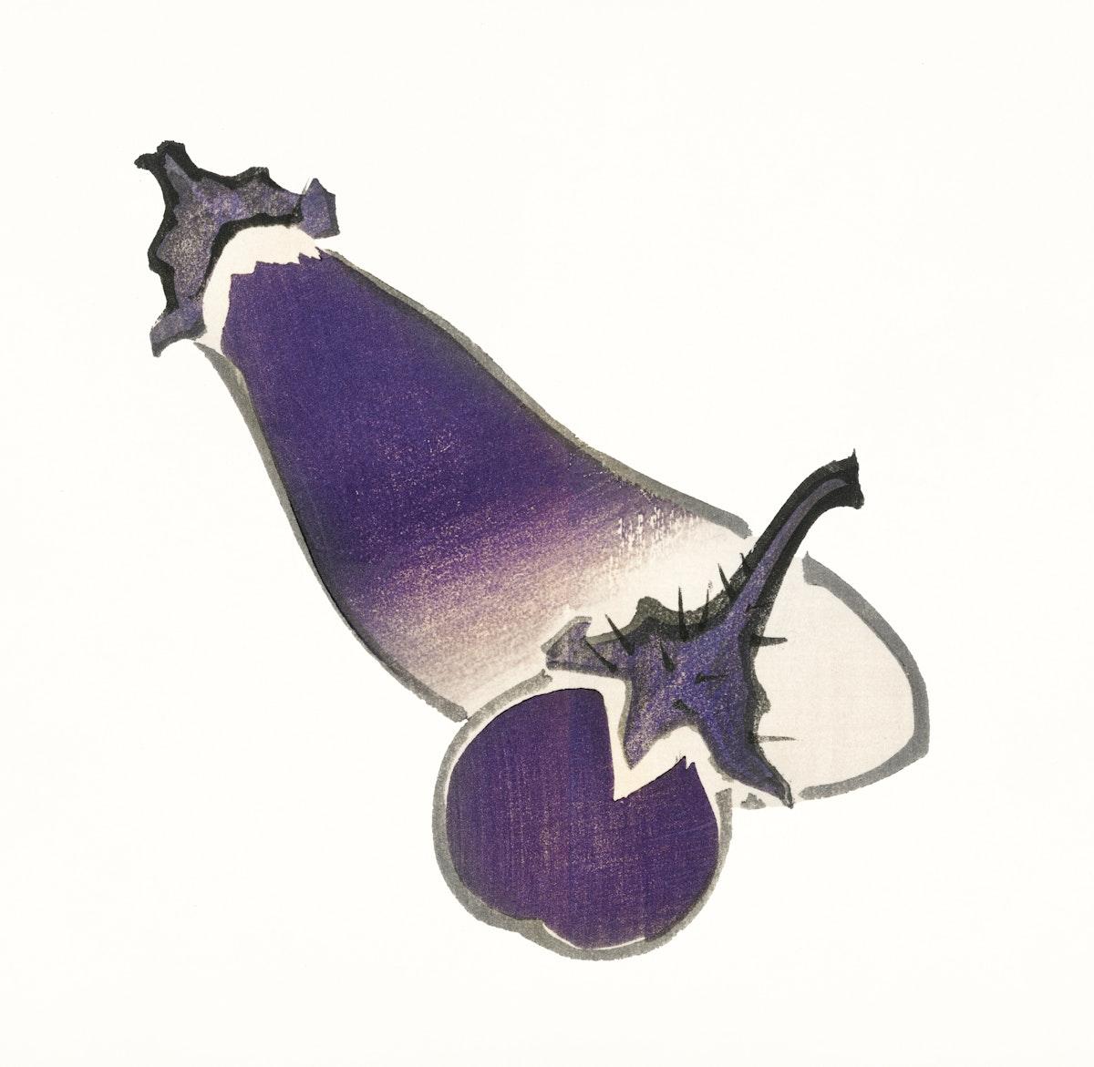 Vintage Illustration of Eggplant and long eggplant.