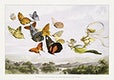 """The Fairy Queen Takes an Airy Drive in a Light Carriage, a Twelve&ndash;in&ndash;hand, drawn by Thoroughbred Butterflies (1870) by <a href=""""https://www.rawpixel.com/search/richard%20doyle?sort=curated&amp;type=all&amp;page=1"""">Richard Doyle</a>. Original from The MET Museum. Digitally enhanced by rawpixel."""
