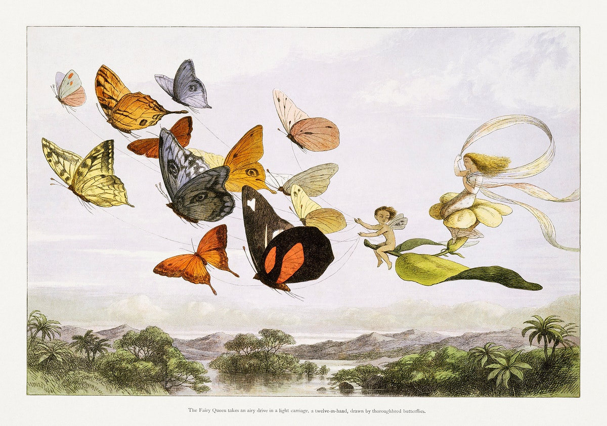 The Fairy Queen Takes an Airy Drive in a Light Carriage, a Twelve–in–hand, drawn by Thoroughbred Butterflies…