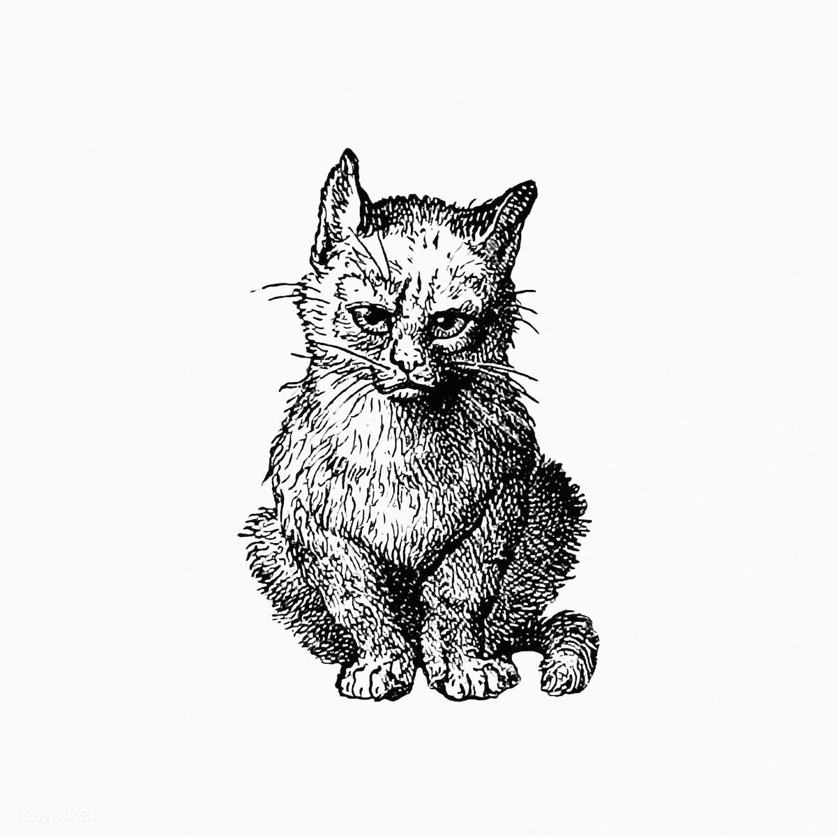 Download Premium Illustration Of Vintage Victorian Style Cat Engraving