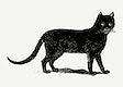 Vintage European style cat engraving vector