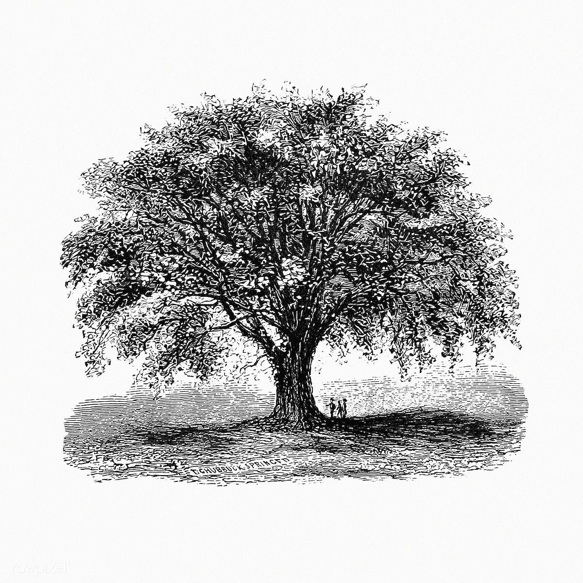Vintage tree illustration | Free public domain illustration