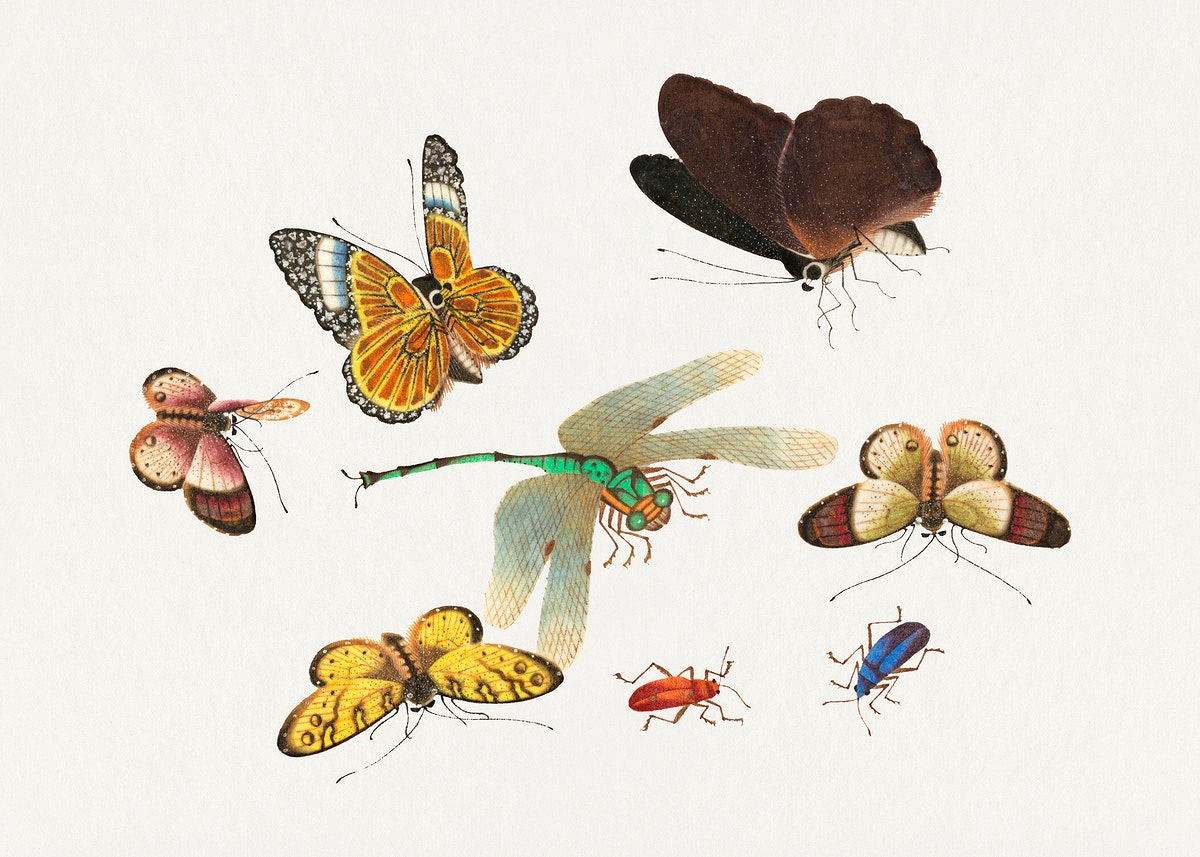 Chinese insect drawing of five butterflies, two beetles and a dragonfly from the 18th century. Original from The Smithsonian…