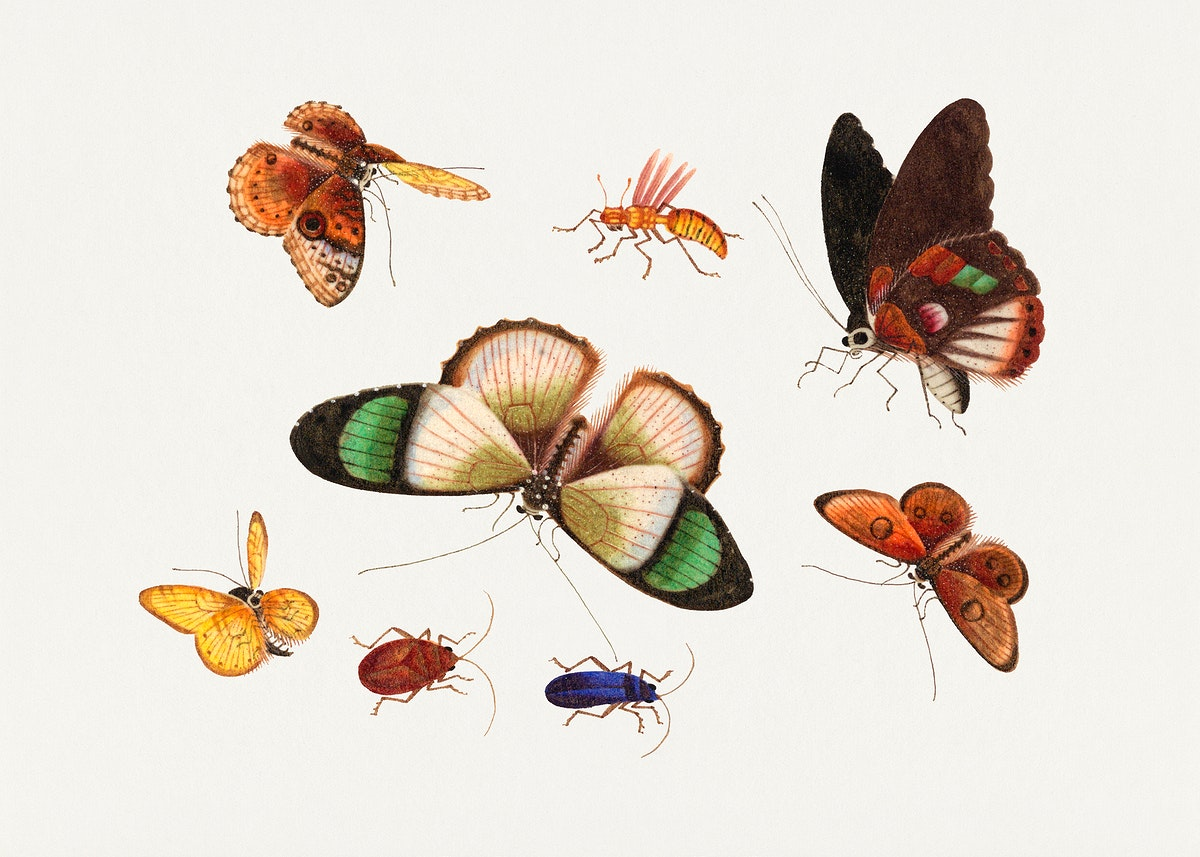 Chinese insect drawing of five butterflies, two beetles and an insect from the 18th century. Original from The Smithsonian…