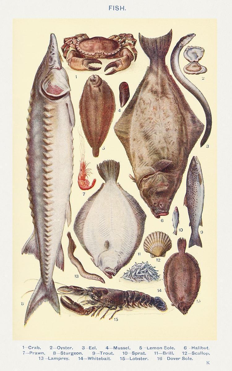Fish II: Crab, Oyster, Eel, Mussel, Lemon Sole, Halibut, Prawn, Sturgeon, Trout, Sprat, Brill, Escallop, Lamprey, Whitebait…