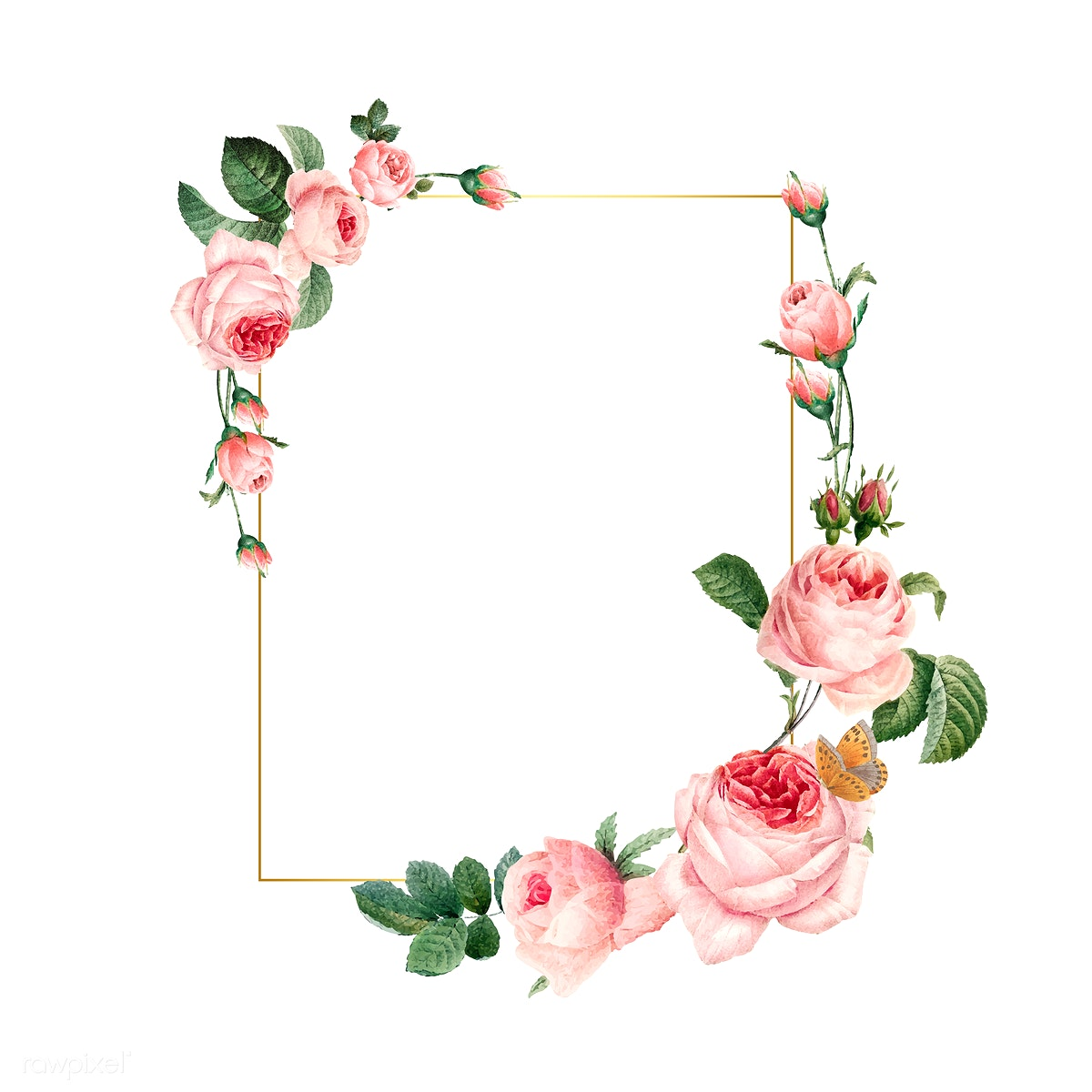 Blank Rectangle Pink Roses Frame On White Bac..