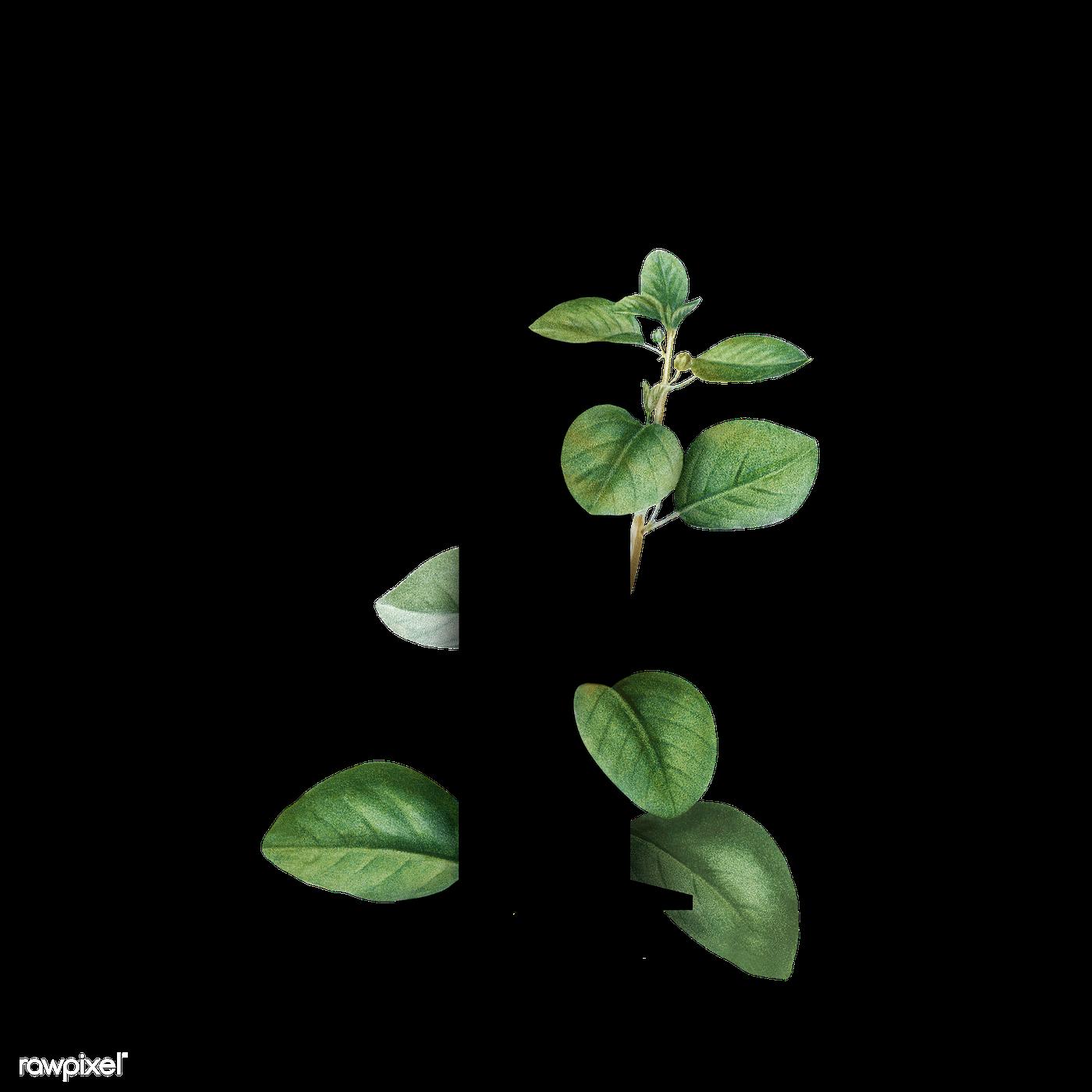 Botanical font letter I | Royalty free transparent png