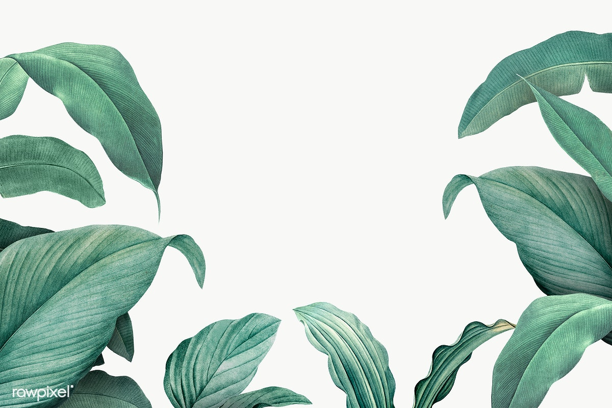 Tropical Leaves Frame Free Stock Illustration 594529