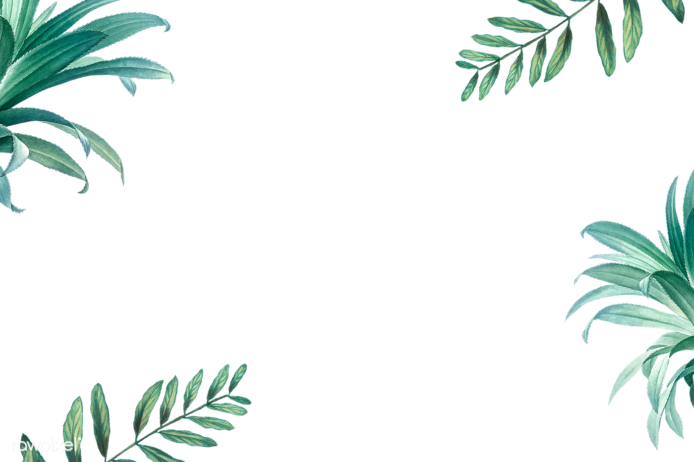Tropical leaves frame | Free stock illustration - 594523