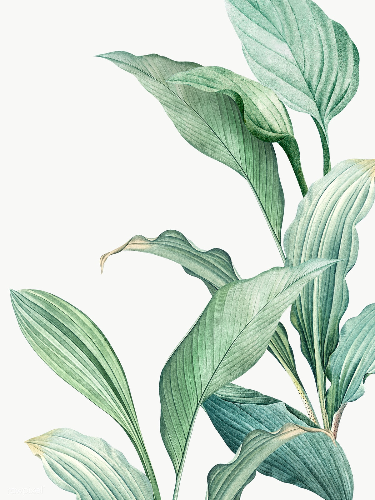 Green Tropical Leaves Free Stock Illustration 594525