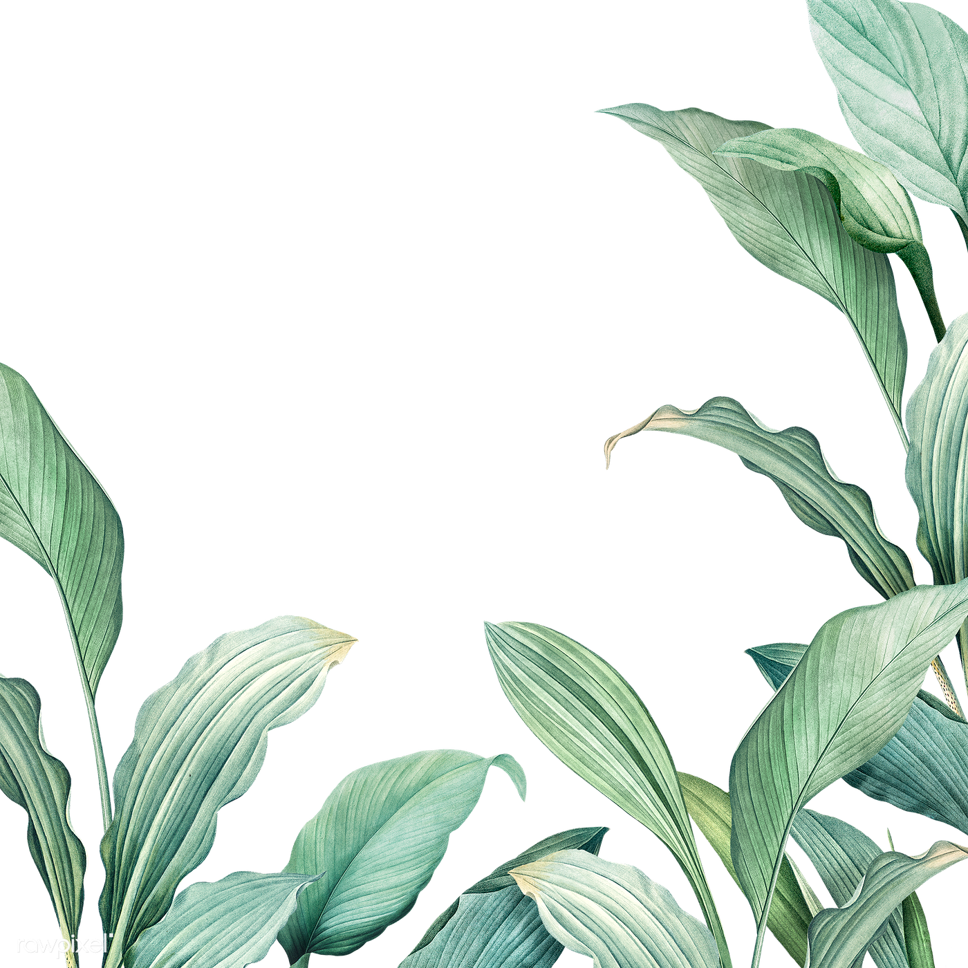 Tropical leaves background | Free transparent png - 594528