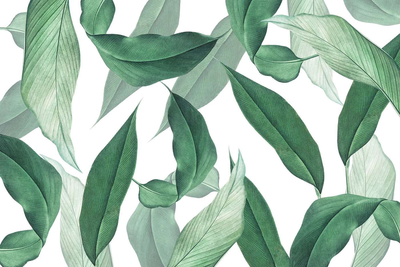 Tropical leaves background | Free transparent png - 594533