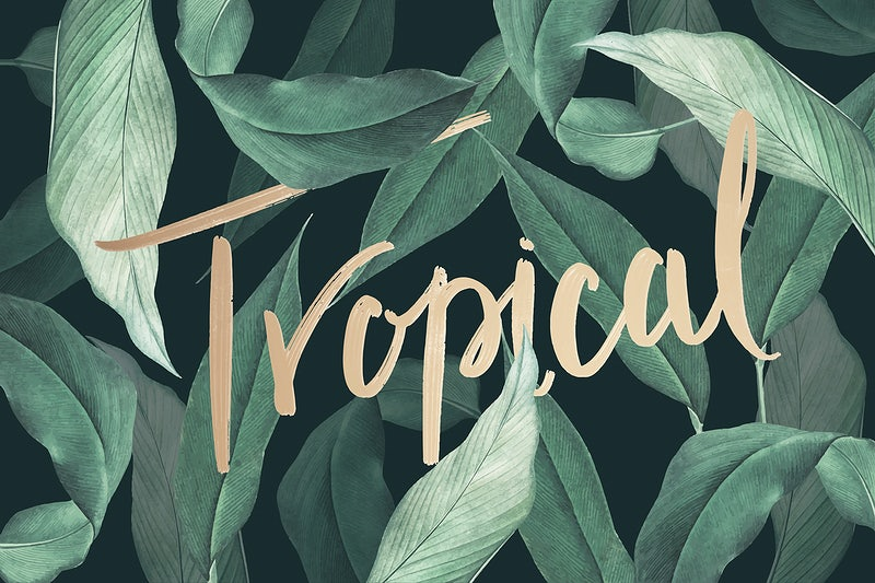 Tropical Leaves Background Alibaba.com offers 1,329 artificial tropical leaves products. download premium vector of hand drawn tropical leaves background vector