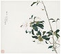 """Insects and Flowers (Qing dynasty ca. 1644&ndash;1911) by <a href=""""https://www.rawpixel.com/search/Ju%20Lian?sort=curated&amp;type=all&amp;page=1"""">Ju Lian</a>. Original from The Getty. Digitally enhanced by rawpixel."""