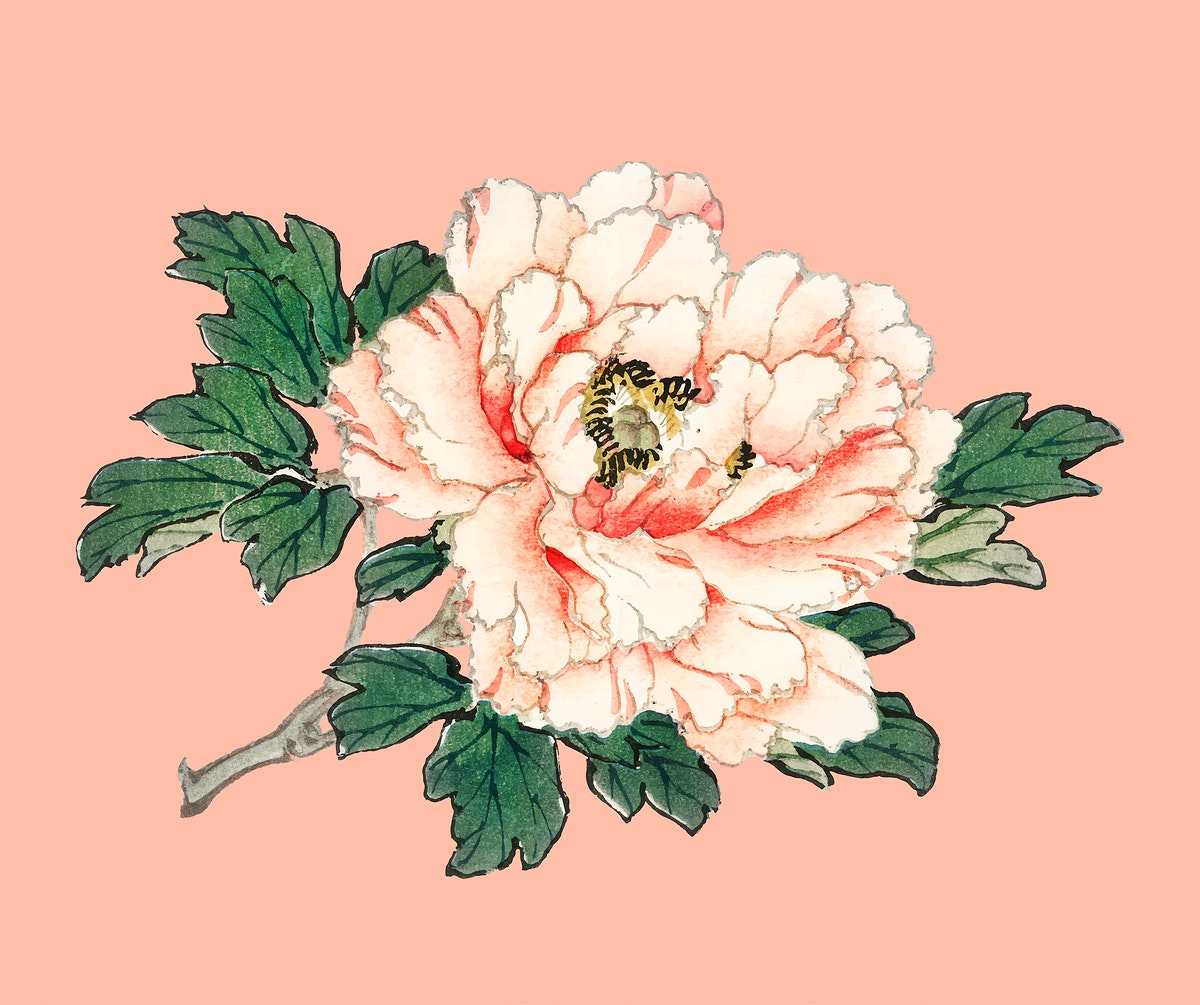 Pink rose by Kōno Bairei (1844-1895). Digitally enhanced from our own original 1913 edition of Bairei Gakan.