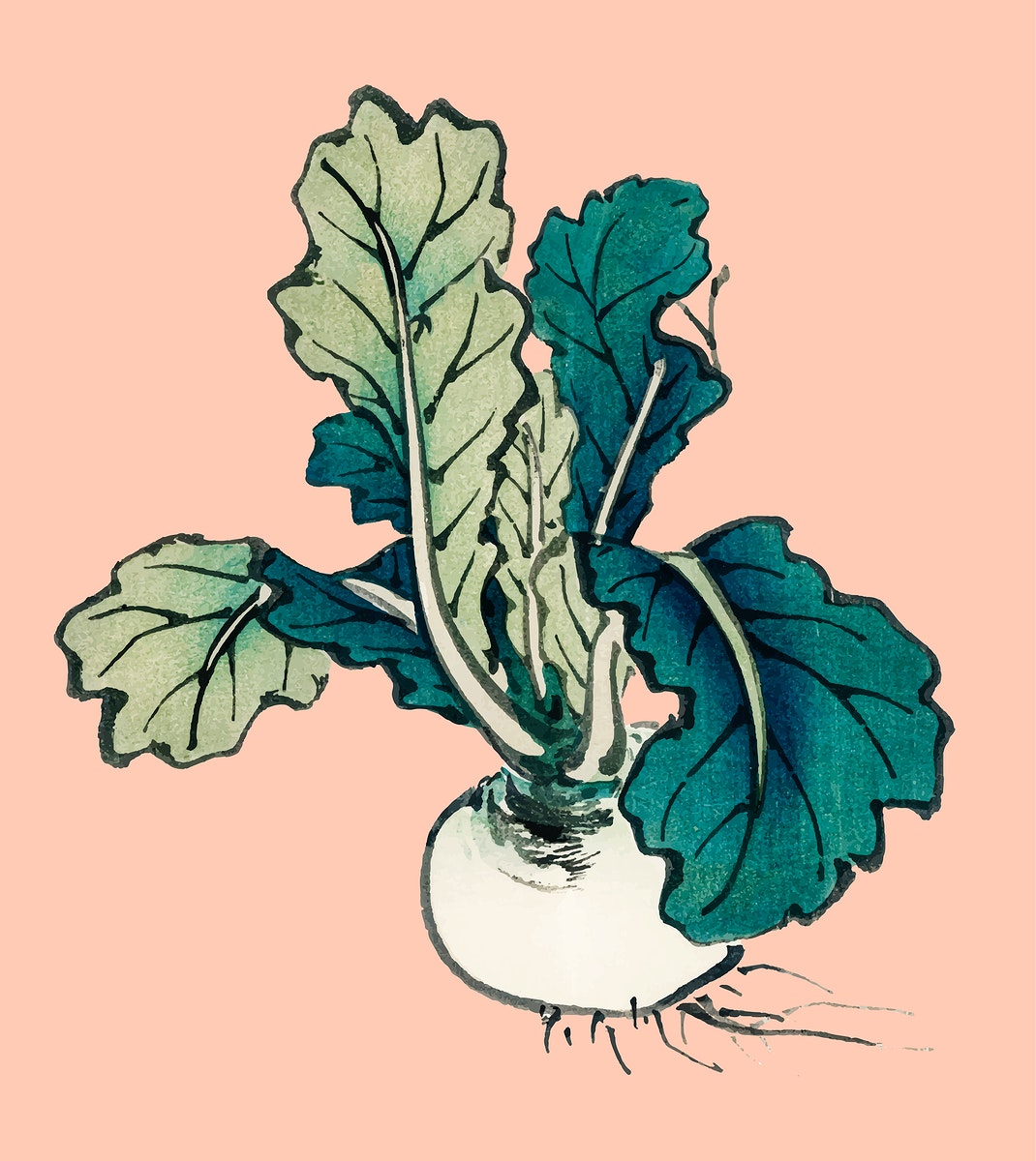 Radish by Kōno Bairei (1844-1895). Digitally enhanced from our own original 1913 edition of Bairei Gakan.