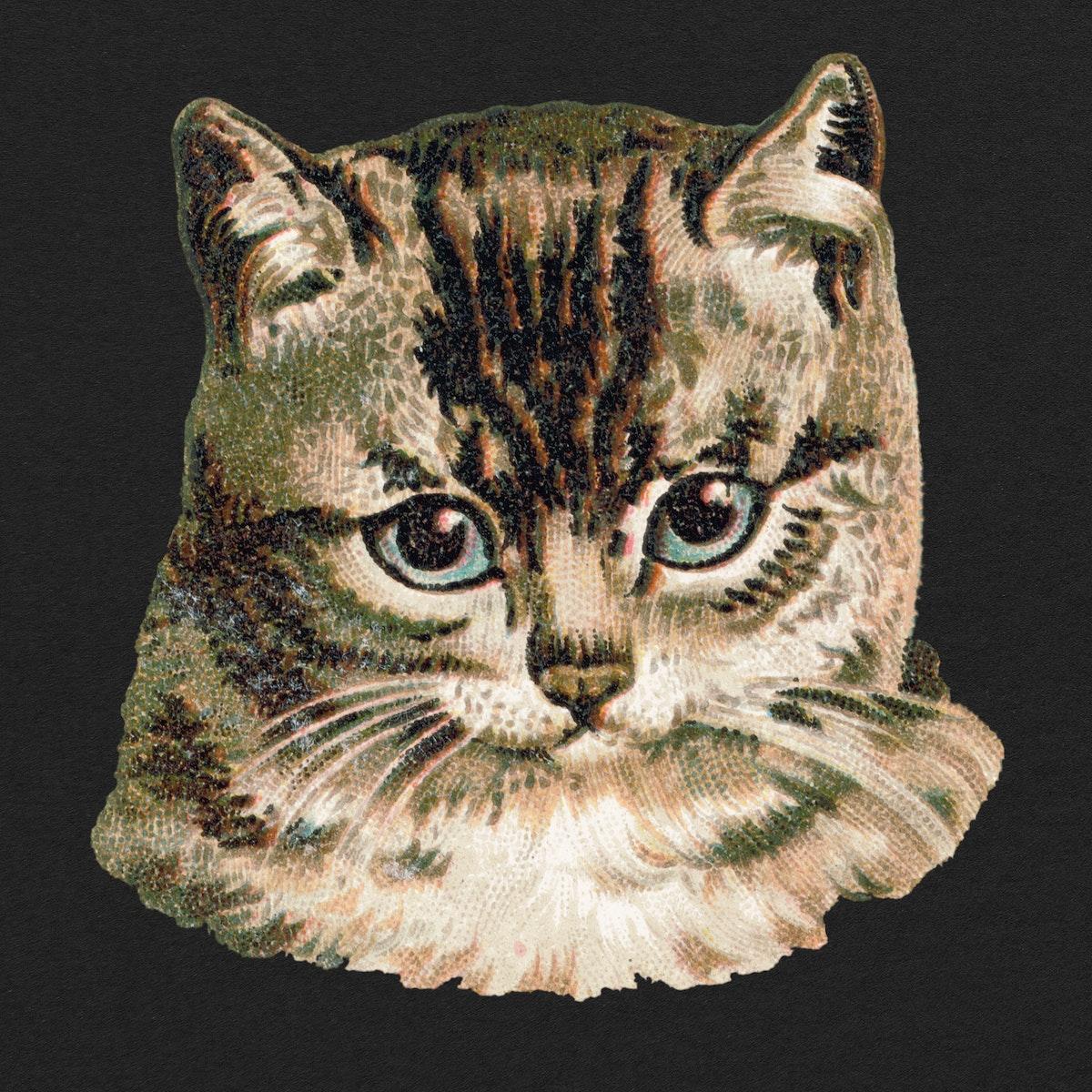 Cat illustration with black background