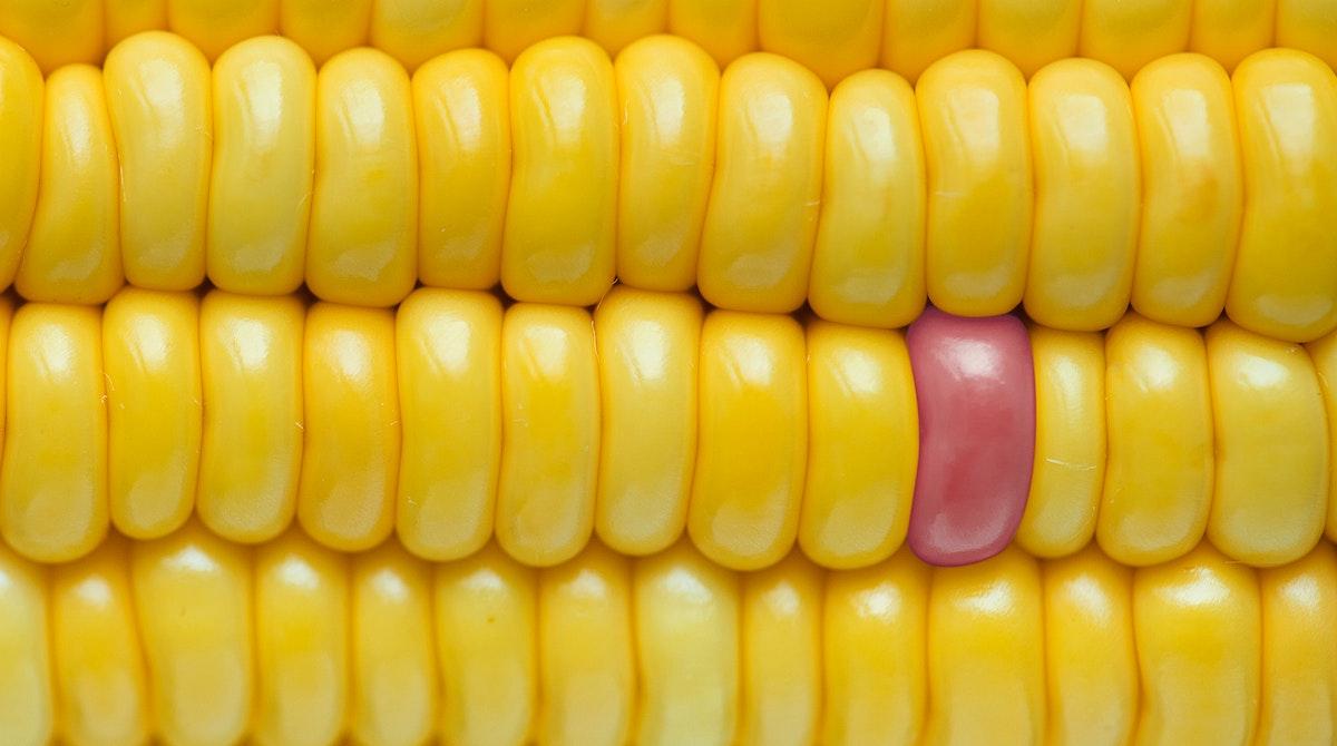 Closeup of yellow corn textured background