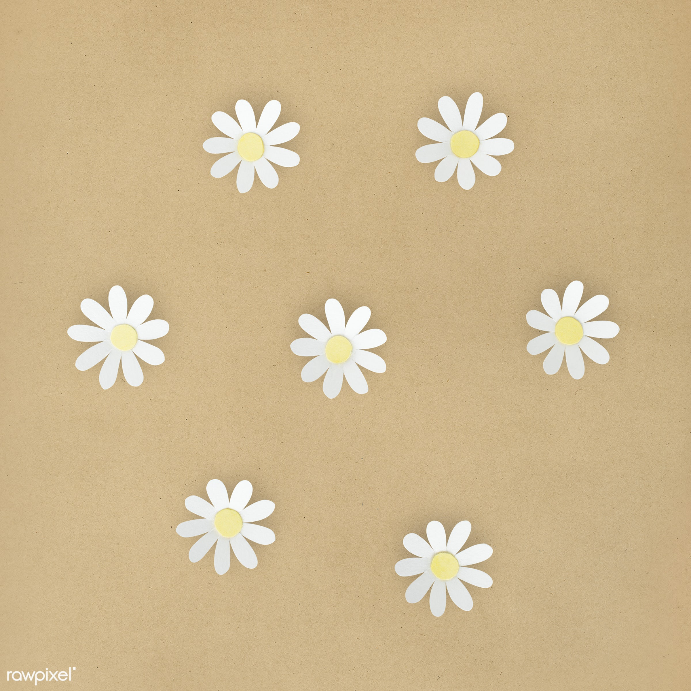 Daisy Flowers Made Out Of Paper Id 261596
