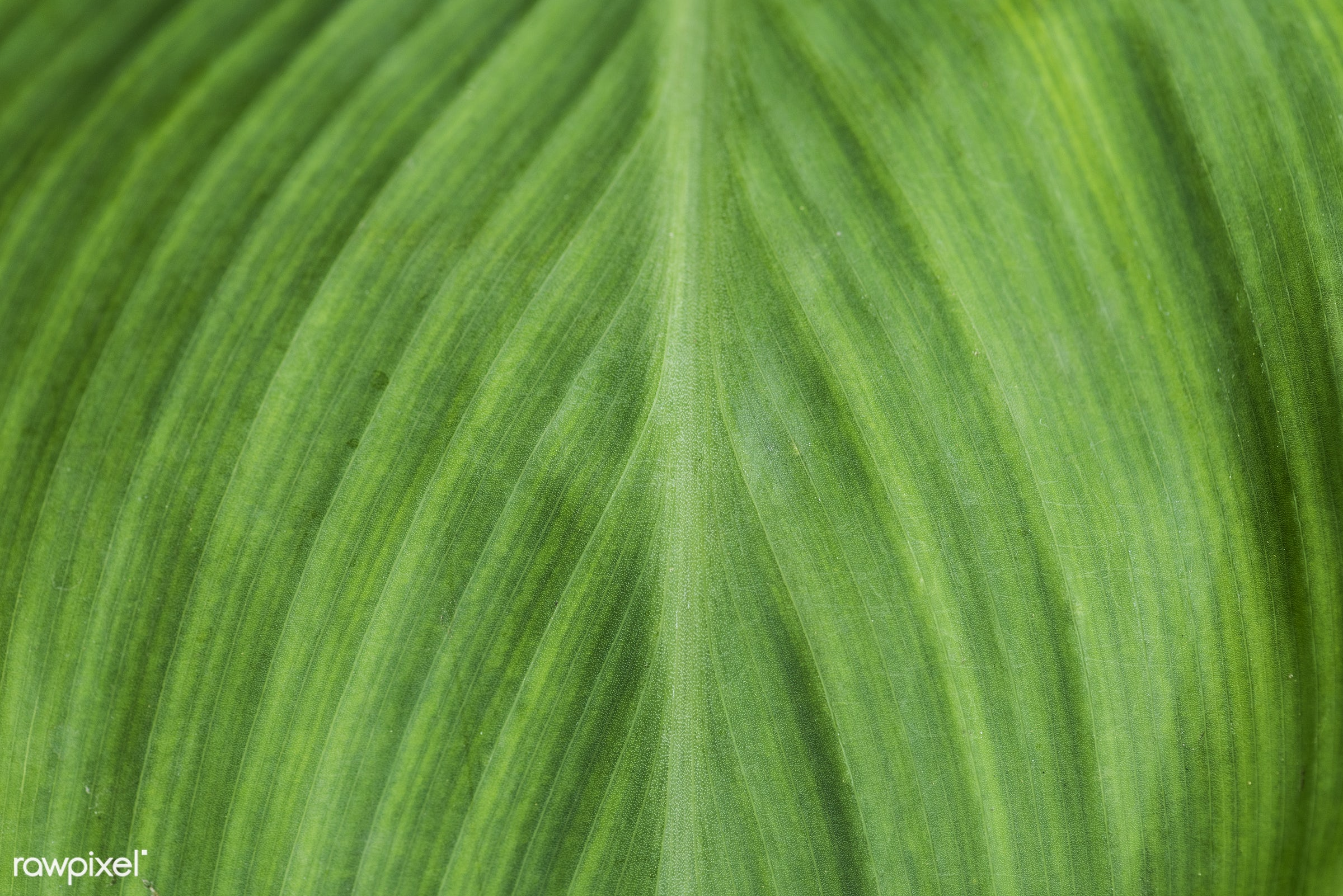 Closeup of green leaf textured background - abstract, attractive, backdrop, background, colour, copy space, craftsmanship,...