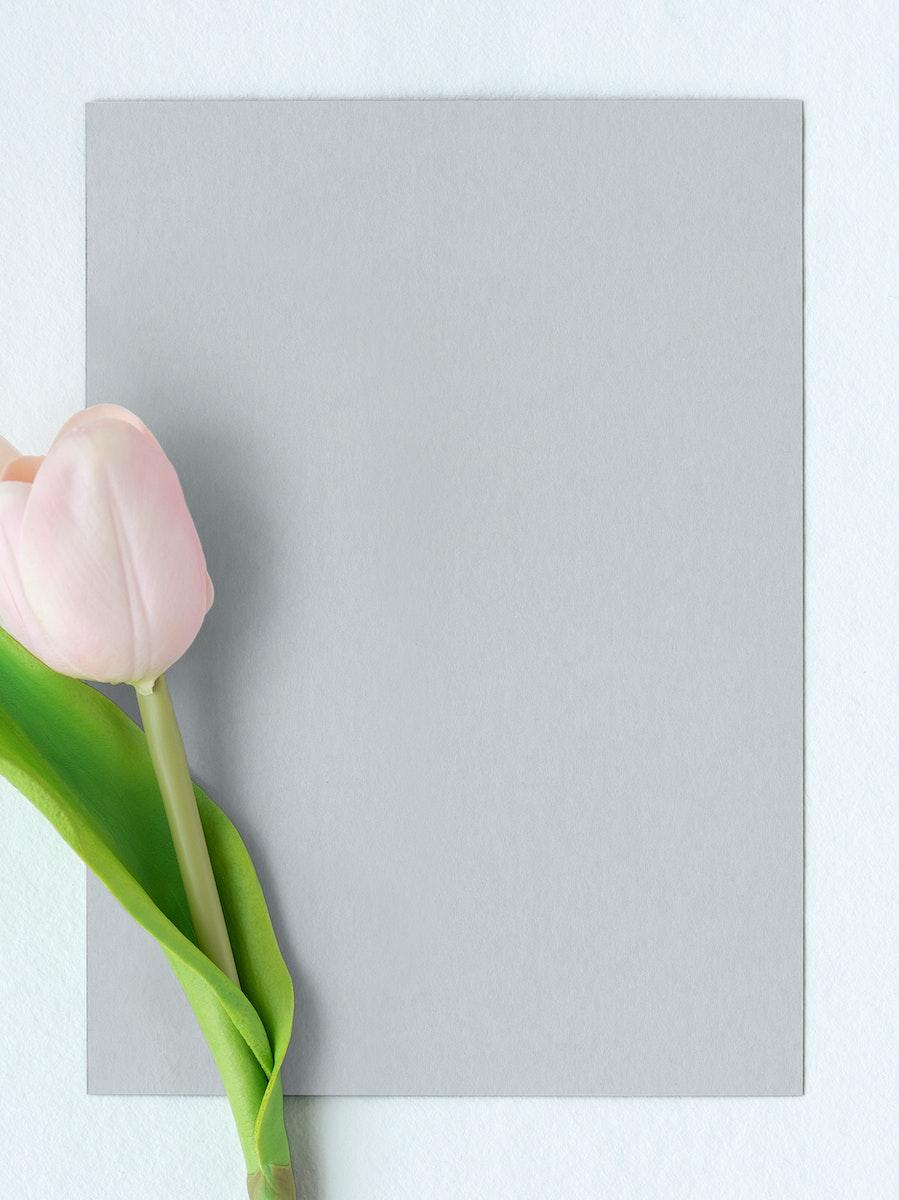 Fresh light pink tulip with blank card mockup