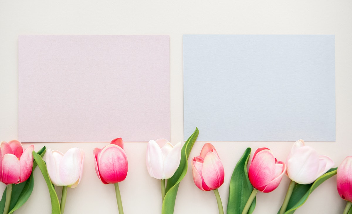 Tulips with pink and blue cards template