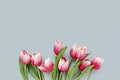 Red tulips on blue card mockup