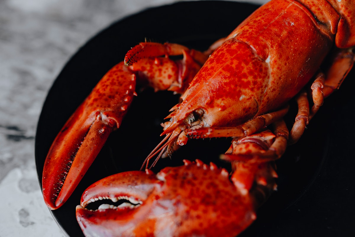 Steamed red lobster for dinner