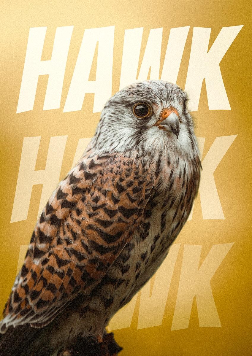 Closeup of a wild hawk background