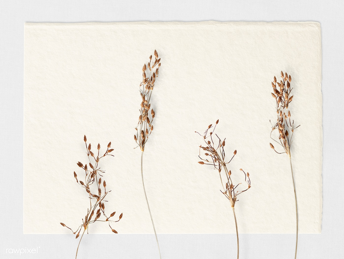 Dried branches on a white paper