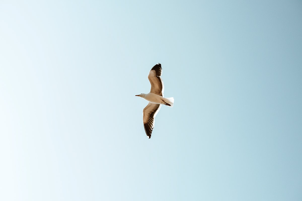 Seagull flying over in the blue sky