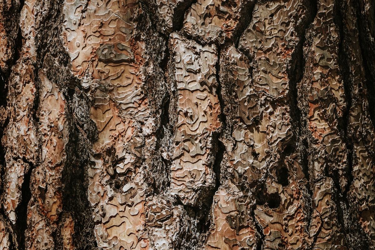 Brown detailed wooden textured background