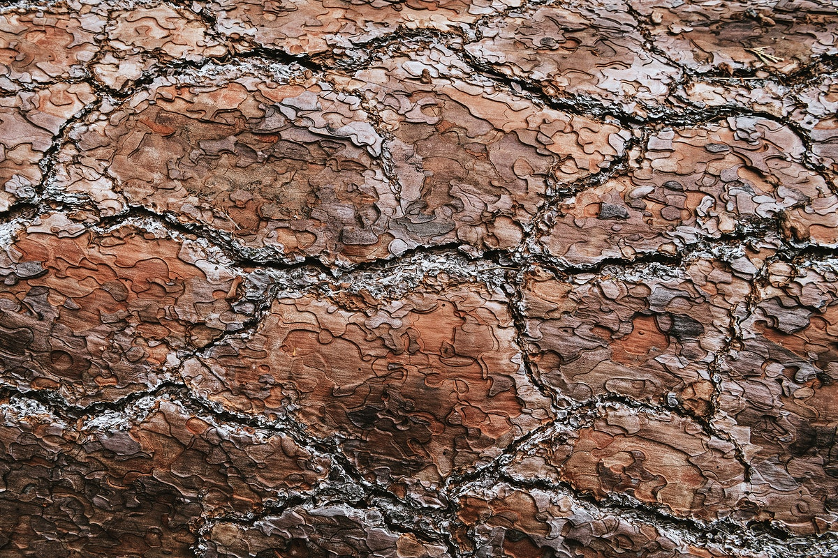Rough brown cracked background texture