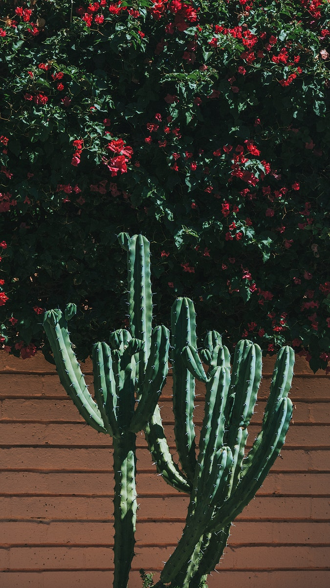 Cacti growing by a brick wall mobile screen wallpaper