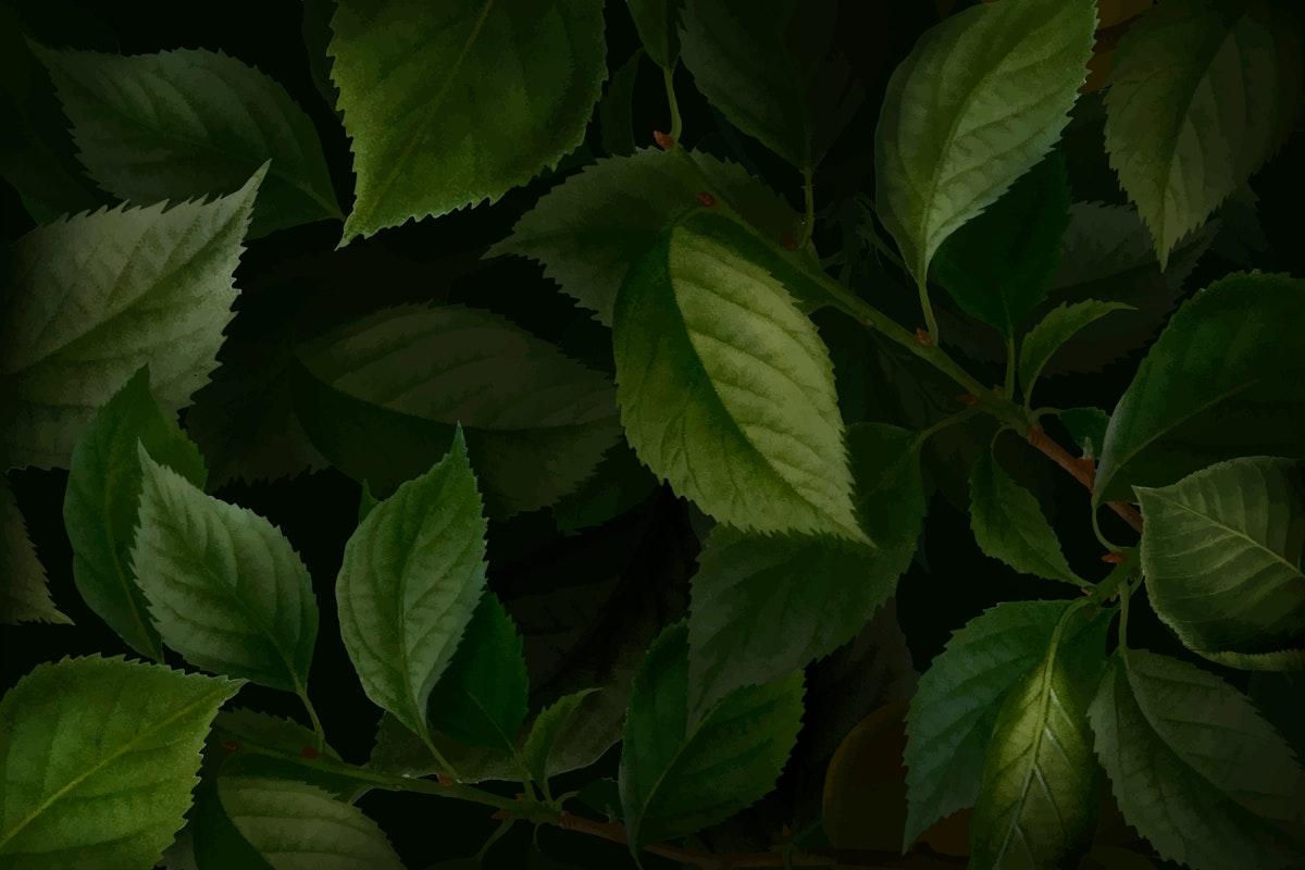 Briançon apricot leaf pattern background vector