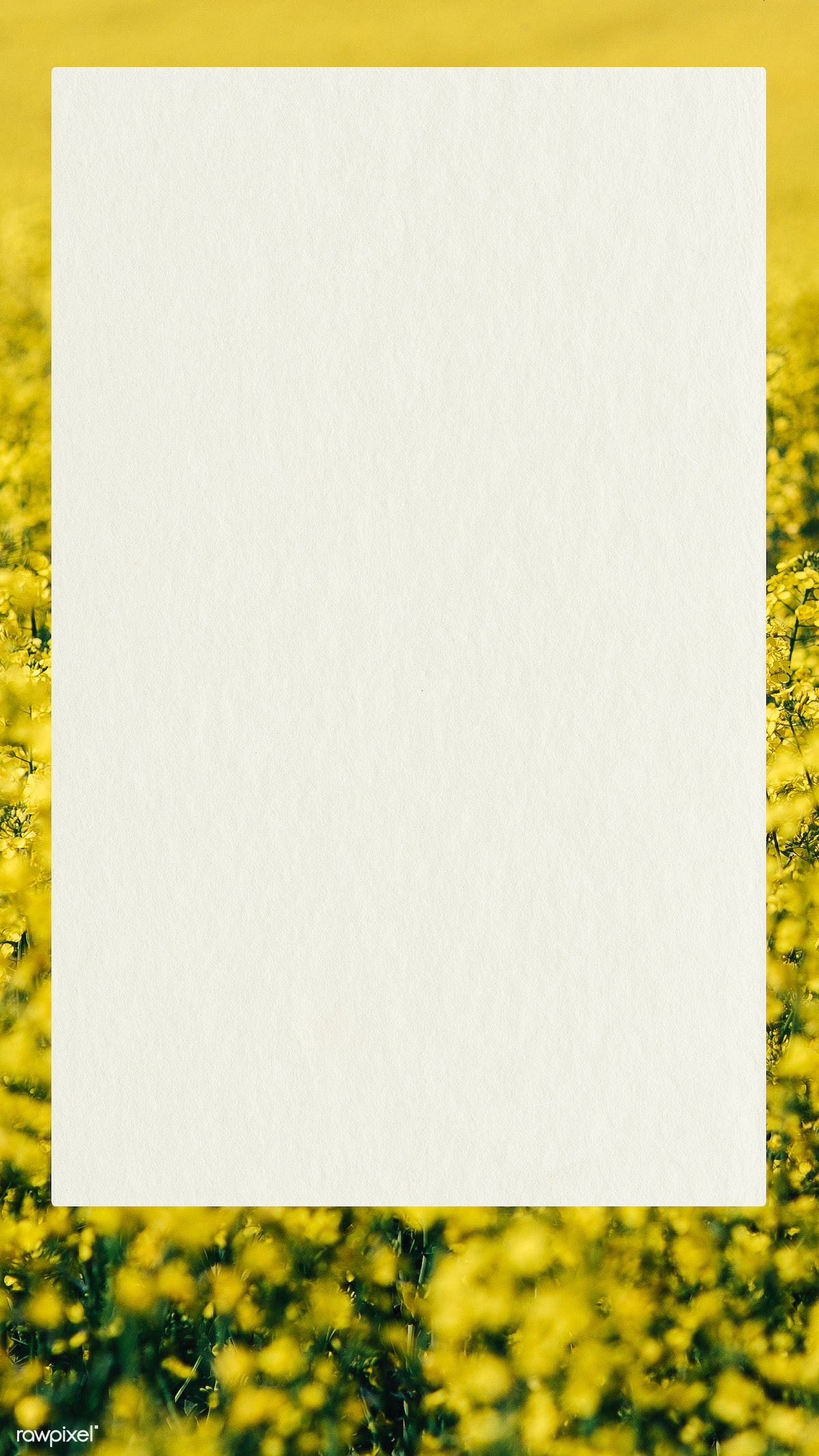Download Premium Psd Of Card On A Field Of Yellow Flowers Mobile Wallpaper