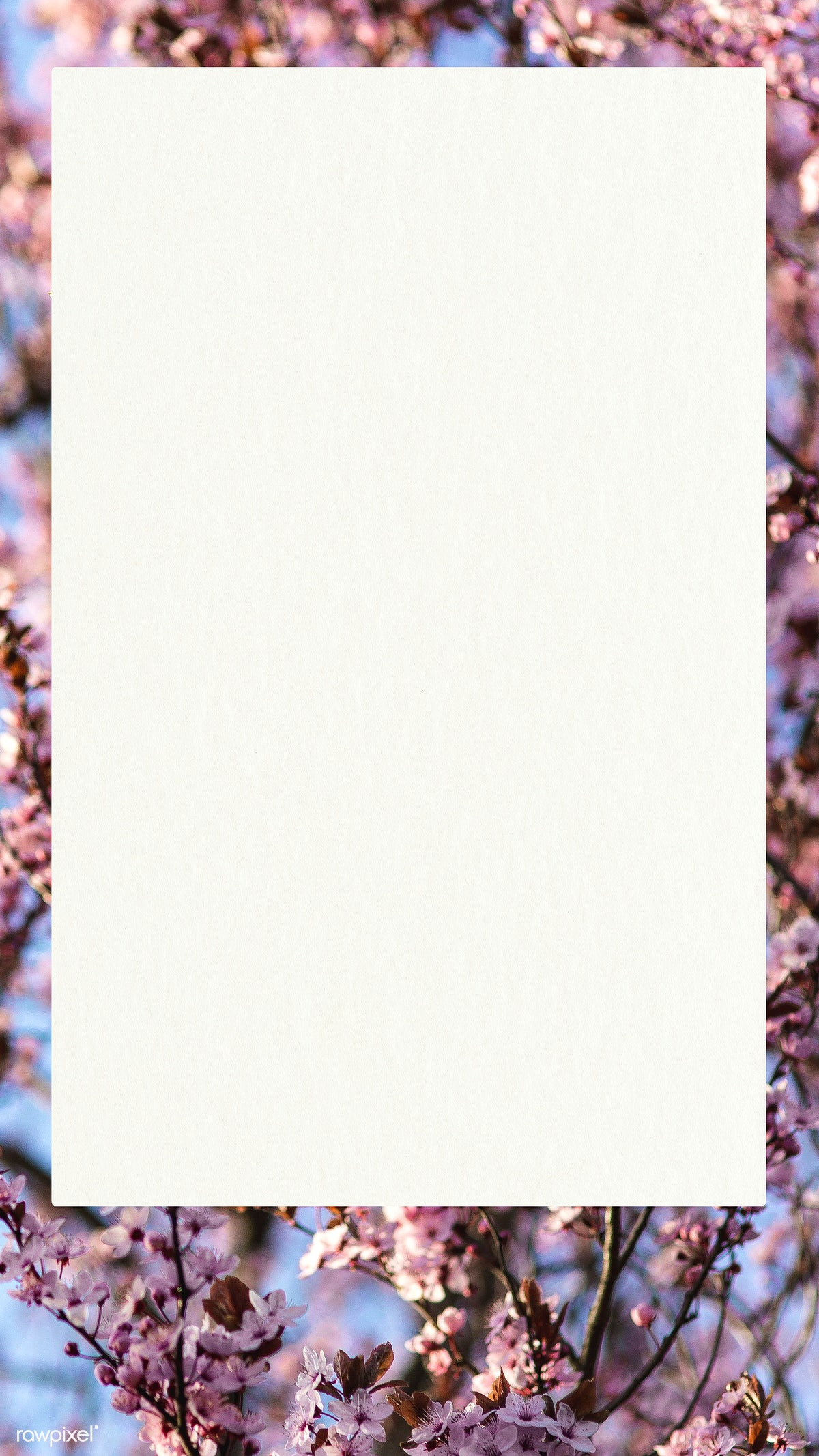 Download Premium Psd Of Poster On A Cherry Blossoms Mobile Wallpaper