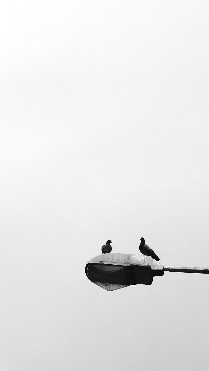 Birds sitting on a lamp post mobile wallpaper