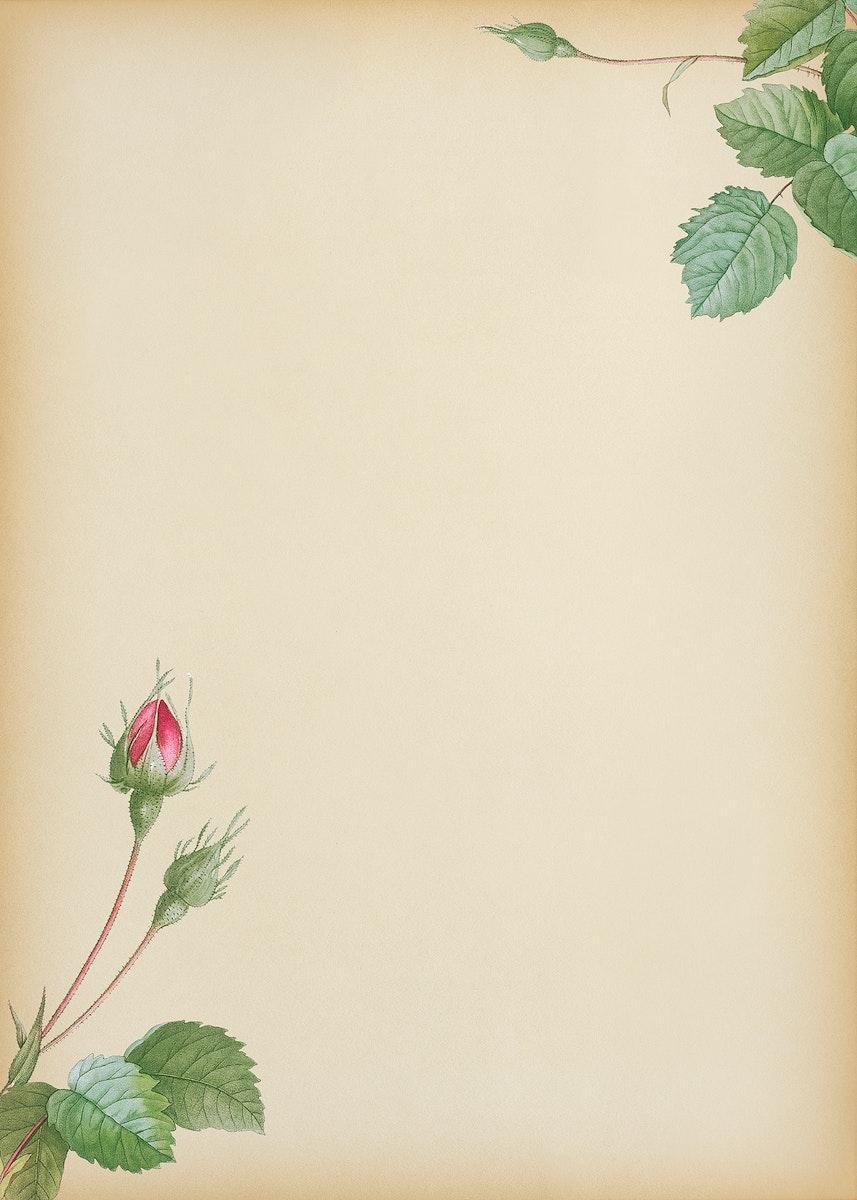 Double moss rose on beige background illustration
