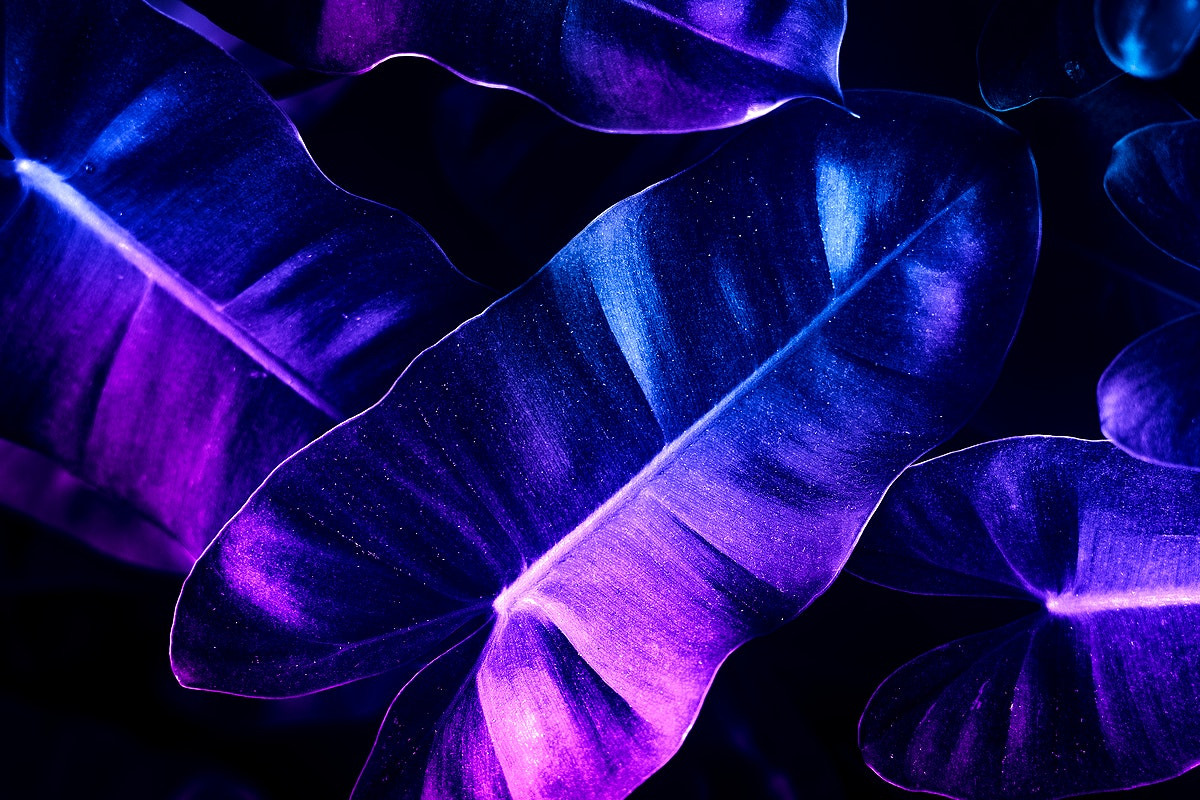 Neon tropical anthurium leaves poster